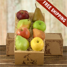 All Fruit Gift Box